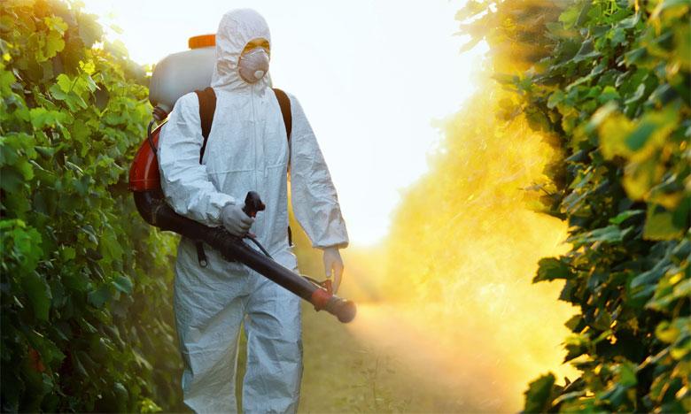 Les néonicotinoïdes, utilisés en pulvérisation ou pour enrober les semences, s'attaquent au système nerveux des insectes, et désorientent et affaiblissent les pollinisateurs.                                                     Ph. DR