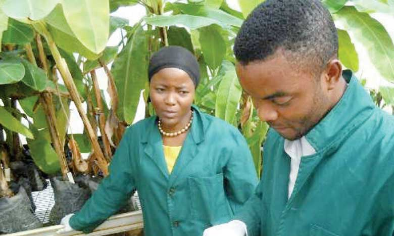 La conférence de Kigali se penchera sur les solutions technologiques qui appuient l'innovation technologique de production moderne dans le secteur agricole.                                                        Ph. DR