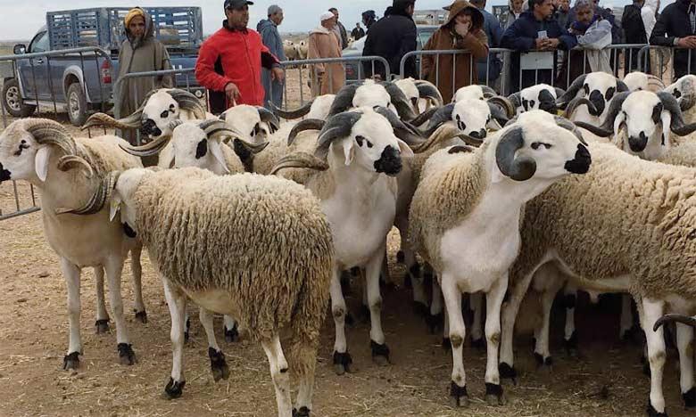 L'ONSSA a assuré le contrôle dans le cadre de commissions locales, des points de ventes, souks  et élevages pour rechercher et réprimer les pratiques frauduleuses