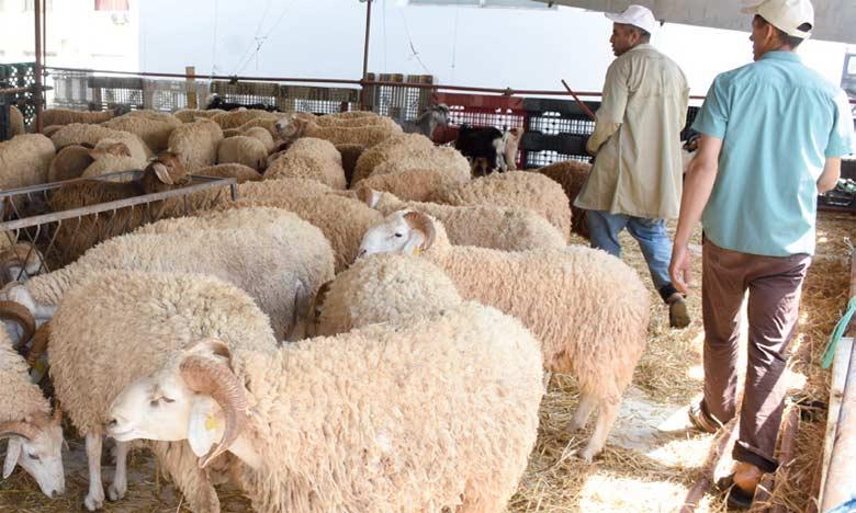 L'enseigne Marjane se porte garante de l'origine de bêtes exposées dans ses points de vente et de la qualité des trois races proposées, à savoir Sardi, Timahdit (Bergui) et Beni Guil.  Ph Seddik