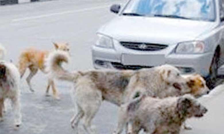 Au Maroc, les réseaux sociaux à la rescousse des chiens