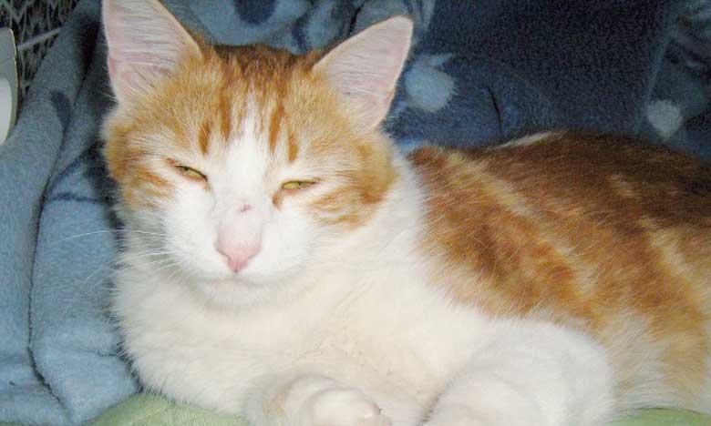 Le chat, un compagnon qui peut se transformer en thérapeute