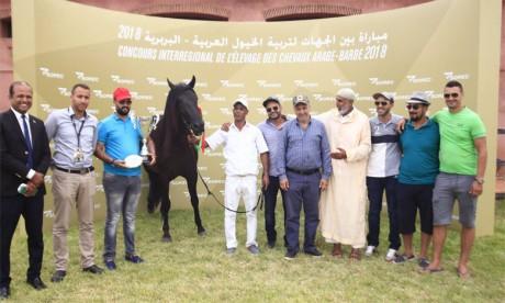 Le Haras Royal de Bouznika domine le Championnat national des chevaux pur-sang arabe