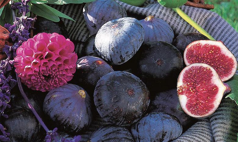 Filière des figues: Plaidoyer pour le renforcement de la recherche scientifique