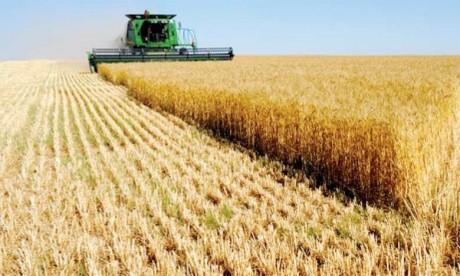 En Afrique, les récoltes  céréalières de cette campagne devraient baisser de 4%