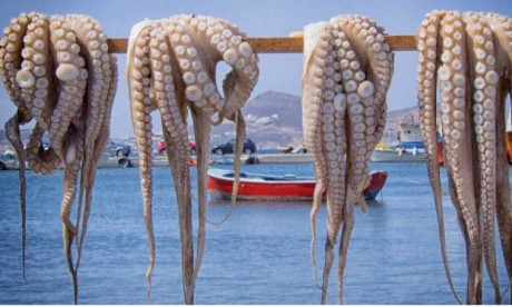 Hausse record attendue des prix du poulpe  en fin de saison