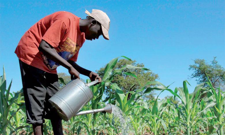 L'agriculture africaine subit des pertes de 68 milliards de dollars par an
