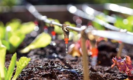 Le Fonds de développement agricole mobilisera 1,67 milliard de DH en 2019