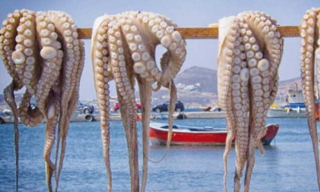 Le poulpe marocain moins cher à l'international en 2019