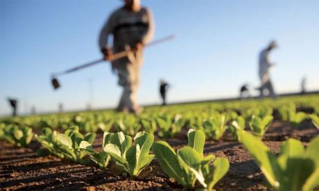 Les jeunes ruraux au cœur des préoccupations du Souverain
