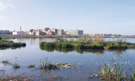 Les zones humides disparaissent  3 fois plus vite que les forêts