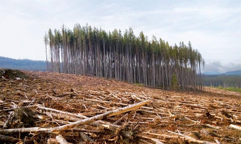 La France veut mettre fin d'ici 2030 à l'importation de produits agricoles et forestriers non durables