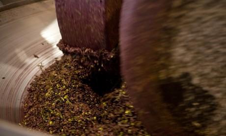 Production d'olives record dans la région Marrakech-Safi durant la campagne actuelle