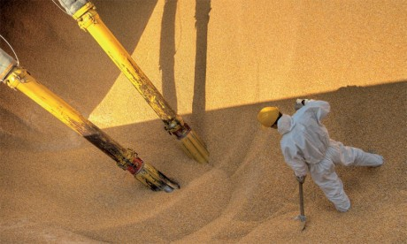 Plus de 48.000 tonnes  de céréales et légumineuses  à importer de l'UE