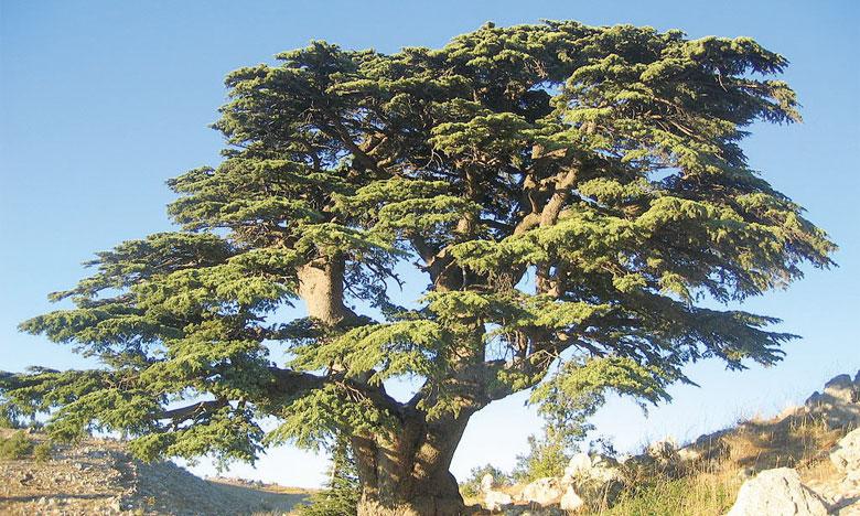 Au Maroc, 15% de la faune  et de la flore menacés d'extinction