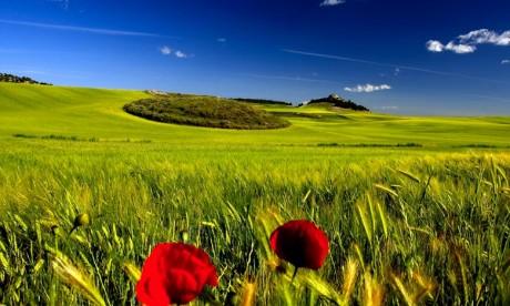 430.000 ha de céréales programmés dans l'Oriental