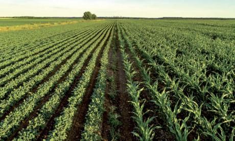 Le projet d'agropole  du Gharb-Loukkos réactivé