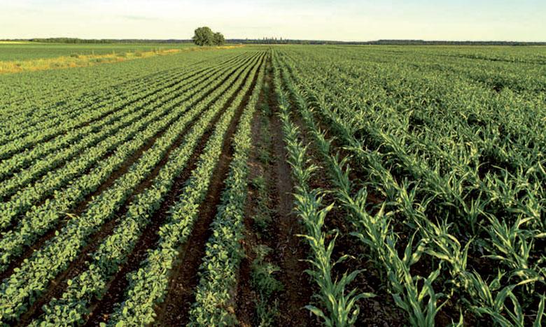 L'étude en projet permettra d'identifier les besoins et les opportunités dans la valorisation industrielle des productions agricoles de la région du Gharb-Loukkos.