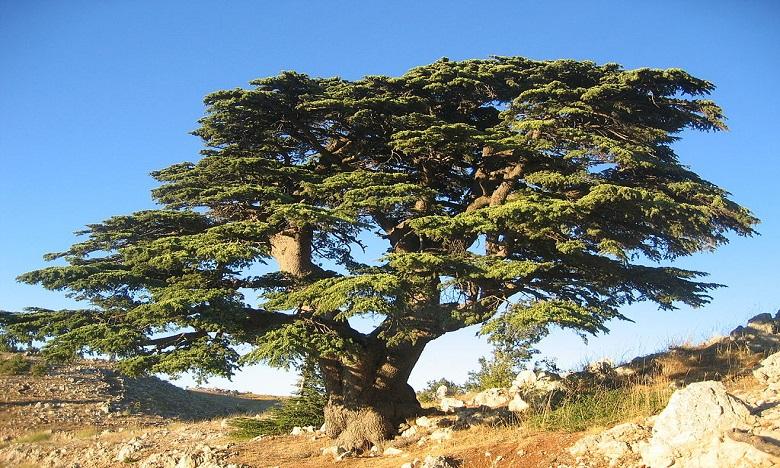 Au Maroc, 15% de la faune et de flore menacés d'extinction