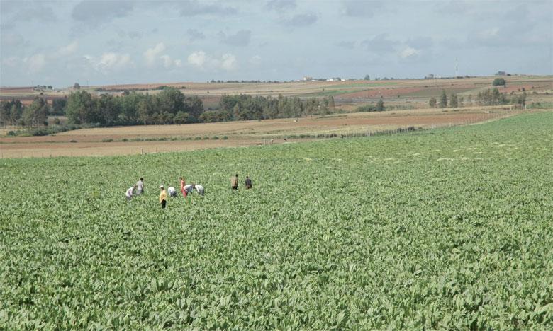 Les premiers semis de la nouvelle  stratégie agricole