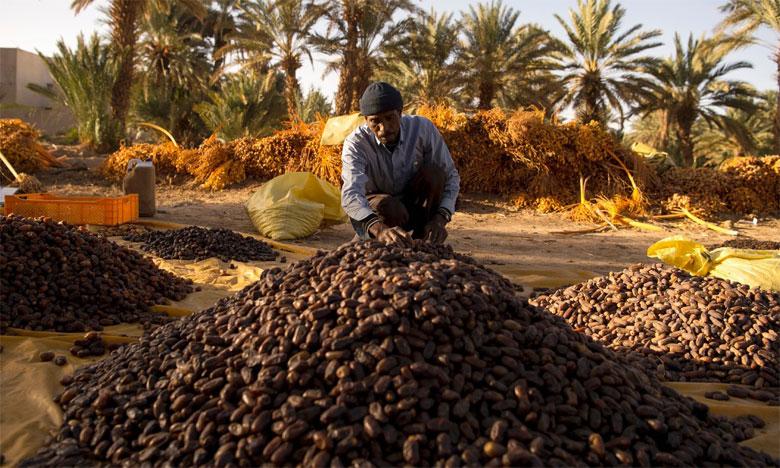 La phœniciculture reste l'une des filières phares de la région, qui dispose d'un important potentiel d'oasis, de terres agricoles et de palmeraies.