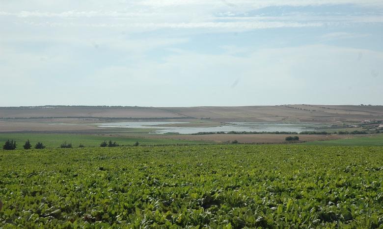 Irrigation localisée du périmètre Ksob à Essaouira: l'équipement de la première tranche dans le pipe