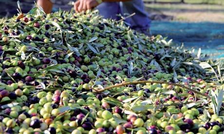 Une production nationale estimée à près de 2 millions de tonnes durant la campagne actuelle