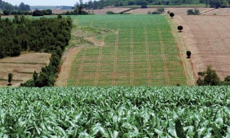 Une nouvelle stratégie agricole dans le pipe