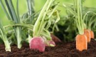 Etude : L'agriculture biologique ne serait pas toujours écolo