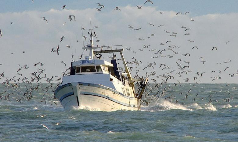 La population d'oiseaux marins a décliné de 70% entre 1950 et 2010