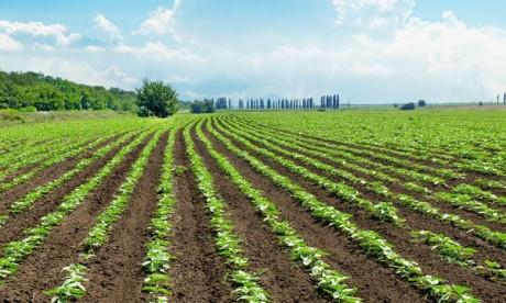 PPP autour des terres agricoles de l'Etat: L'ADA mandate Glotemar pour évaluer les réalisations