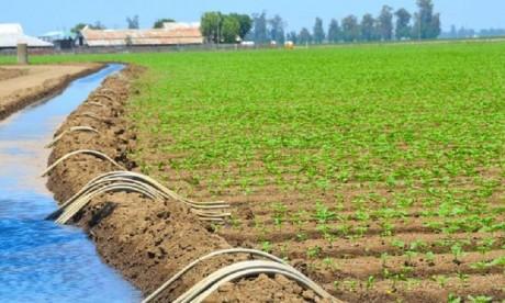 Une campagne agricole prometteuse en dépit des aléas climatiques
