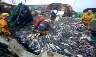 Accord de pêche Maroc-UE : La commission de la pêche livre son verdict