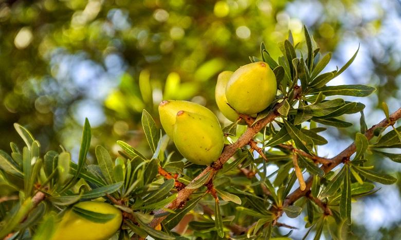 Stratégie pour l'arganier et plantes aromatiques : Le marché attribué à Ed Trust
