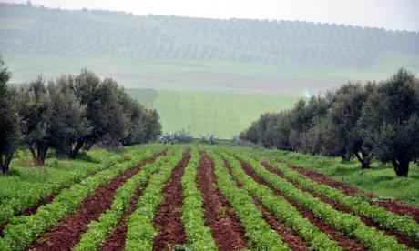 Casablanca-Settat : la saison agricole se présente sous de bons auspices