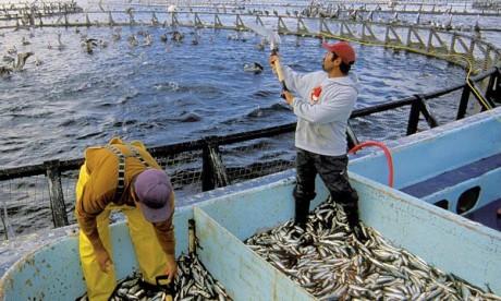 Des investissements tous azimuts dans le secteur de l'aquaculture