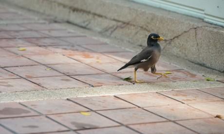 Insolite : Un oiseau perturbe le vol Singapour-Londres