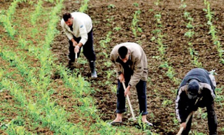 L'étude pour une nouvelle stratégie  agricole à livrer