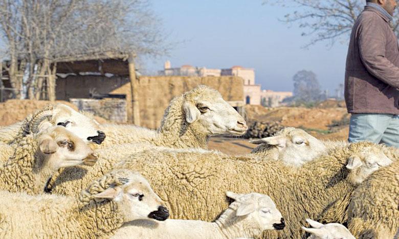 Un ambitieux projet  pour les éleveurs d'Azilal