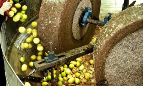 La province de Taounate compte 82 unités de trituration d'olives, dont plusieurs ont été autorisées à exercer leurs activités avant la promulgation des lois sur le respect de l'environnement. Ph : DR