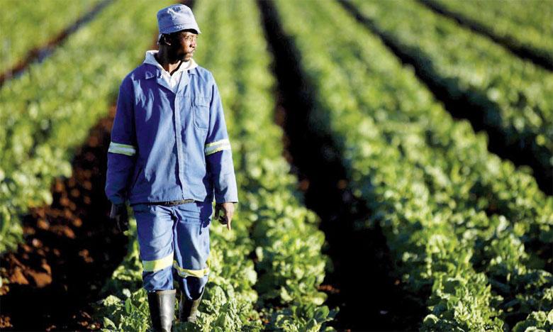 La FAO lance un appel  pour 940 millions de dollars  au profit de 30 pays