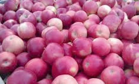4.000 tonnes de pommes  à importer