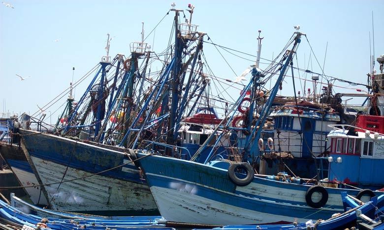 130.000 T de poissons débarquées au port de Tan-Tan en 2018