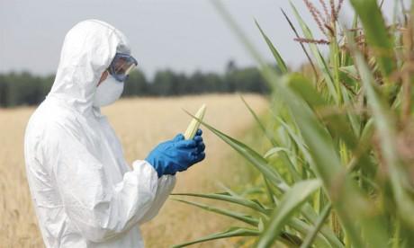 Le risque de libération accidentelle d'OGM dans la nature pris au sérieux
