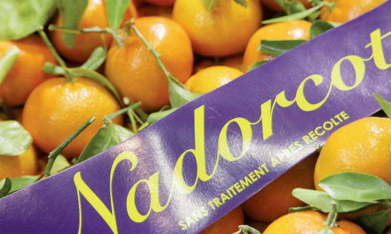 La variété NadorCott cartonne  aux États-Unis