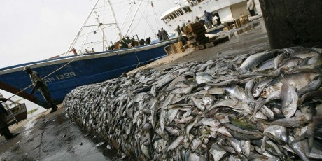 Le premier rapport mondial inquiète la FAO