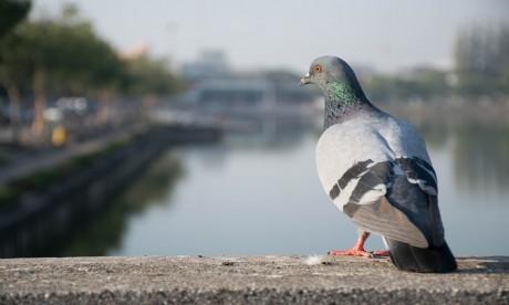 Découvrez l'oiseau le plus cher au monde