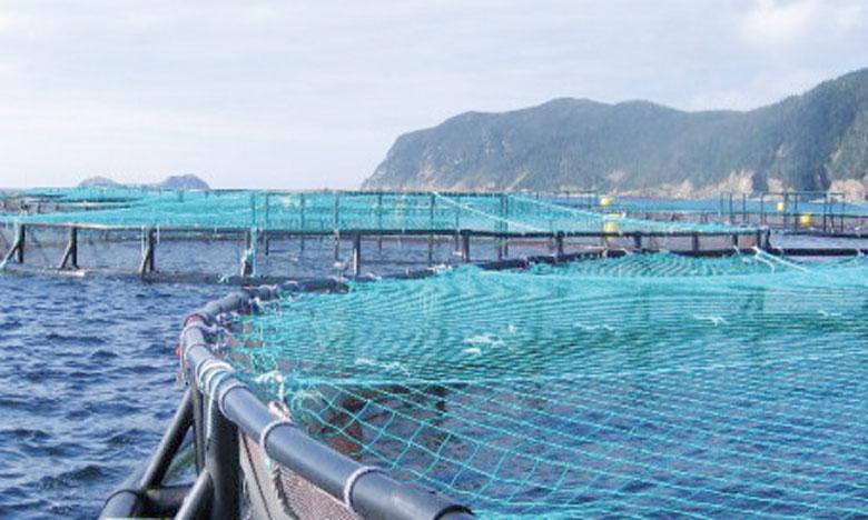 240 millions de dirhams pour 16.000 tonnes de poissons produites