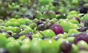 Une huile d'olive marocaine finaliste du Prix COI 2019
