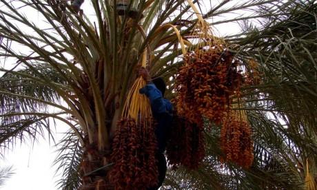 «Saham Agri» remporte le Prix Khalifa du palmier dattier et de l'innovation agricole
